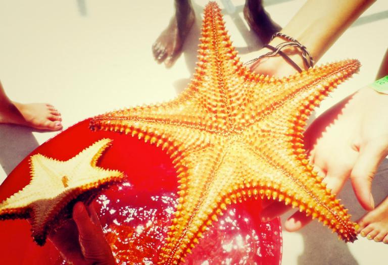 caribbean-starfishing