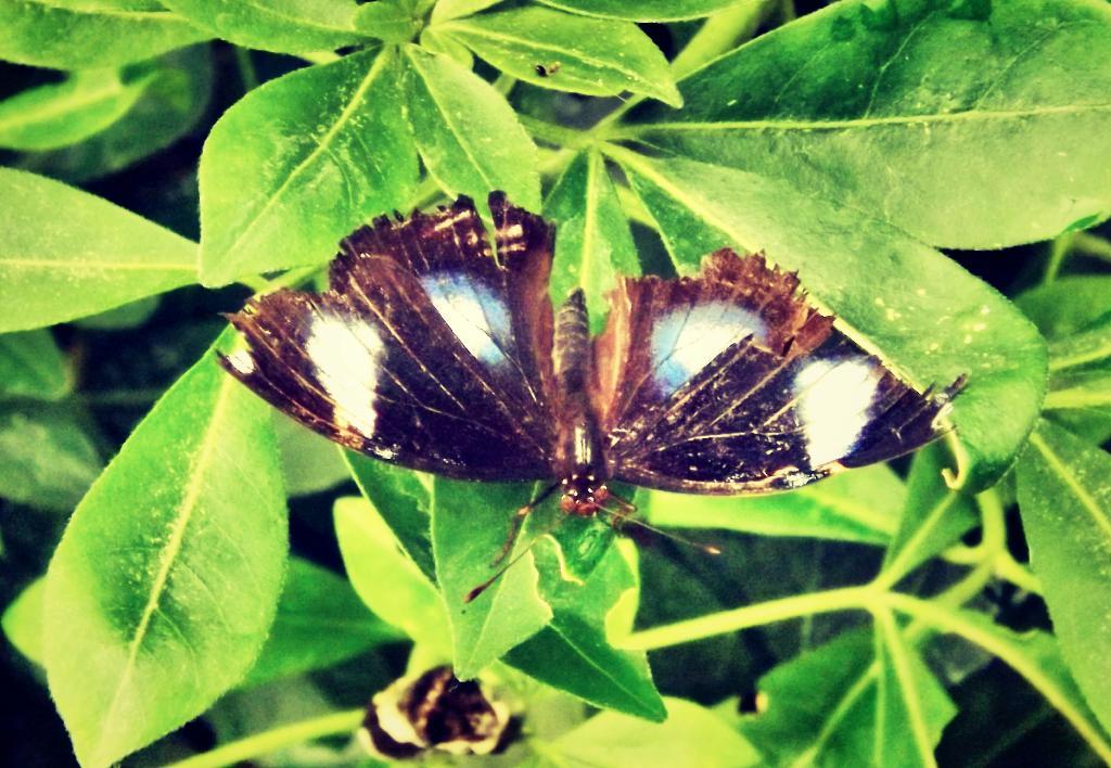 blue spots