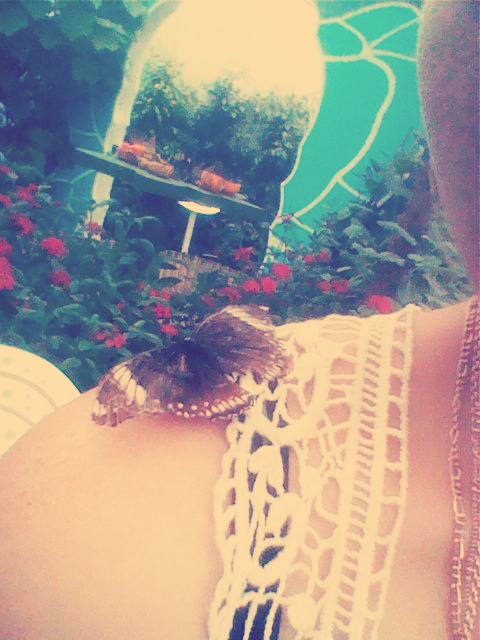 butterfly me